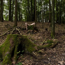 Joanna Rajkowska<br />Last Summer in Obersalzberg<br />installation view