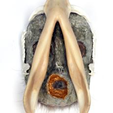 Joanna Rajkowska<br />Mask with Boars Jaw<br />2019<br />papier-machè, wild boars jaw, wire, animal fur, acrilic paint<br />29.5x16x15.5cm (approx.) ph. Andy Keate