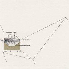 Joanna Rajkowska<br />357 Glasser Safety Slug 80gr Prefragmented Bullet at 1785 f:s<br />2015<br />20.6x14.6cm